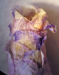 "<p>Colorful ""flower sandwiches"" of mud and petals provide havens for rare solitary bee larvae, a new study says.</p>"