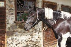 Auch Pferde kann man beim Landhotel Spreitzhofer finden Horses, Animals, Kids Animals, Animais, Animales, Animaux, Animal Books, Horse, Animal
