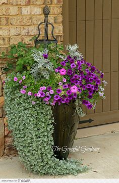 a Great use of Petunias, Helichrysum, and Dusty Miller