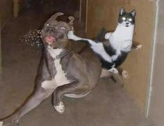 funniest pictures ever | Enjoy, and try not to laugh too hard. You might be the next one who ...