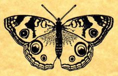 Buckeye Butterfly Rubber Stamp by ButterSideDownStamps on Etsy, $7.95