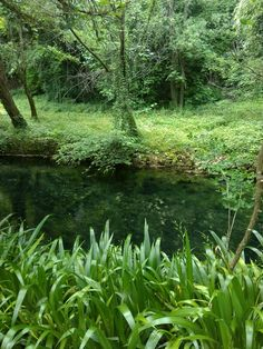 Green natura sorgente gorgazzo Aquarium, Herbs, Goldfish Bowl, Aquarium Fish Tank, Herb, Aquarius, Fish Tank, Medicinal Plants