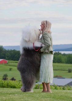 Minden változik, egy valami azonban örök: a kutyusok emberek iránti szeretete. A baj csak az, hogy amikor megnőnek, a kutyák nincsenek tekintettel arra, hogy már nem olyan kis tenyérnyi apróságok, mint kölyökkorukban.                                         F