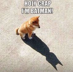 I'm Batman Funny Dog Pictures   Fun Things To Do When Bored