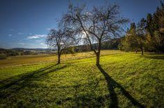 "Fotografie ""Poslední listy"" | Megapixel.cz Country Roads, Landscape, Pictures, Scenery, Corner Landscaping"