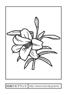 ユリ(主線・黒)/夏の花/無料塗り絵イラスト【ぬりえプリント】