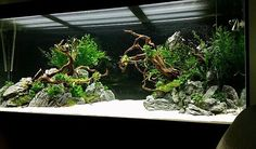 php cichlids fish fish fish Betta reefs aquarium fish fish sharks Aquarium Aquascape, Planted Aquarium, Aquascaping, Aquarium Terrarium, Aquarium Landscape, Diy Aquarium, Nature Aquarium, Saltwater Aquarium, Aquarium Fish Tank
