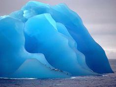 Pingouins sur glace