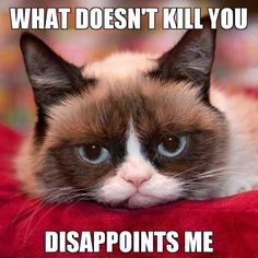 LOL! Grumpy Cat is so wrong for this!