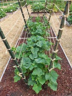 101 Gardening: The Best Trellis Designs #Organic_Gardening #bestgardentools #gardentrellis