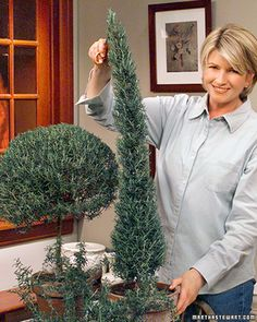 Traditionally, topiaries are made from plants like ivy, boxwood, and myrtle, but they can be created from just about any woody perennial. Potted rosemary trimmed into a topiary sphere or an elongated pyramid looks elegant in the garden and provides herbs for the kitchen. And while training rosemary takes several years, many beautiful trained plants are available from nurseries. To care for your rosemary, a shrubby herb, plant it in a soil mix consisting of two parts potting soil, two...