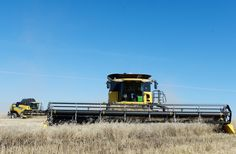 Franck Groeneweg and his crew from Green Atlantic Farms located at Edgeley Saskatchewan make short work straight combining a Canola field northeast of Edgeley near Fort Qu'Appelle September 16, 2014.