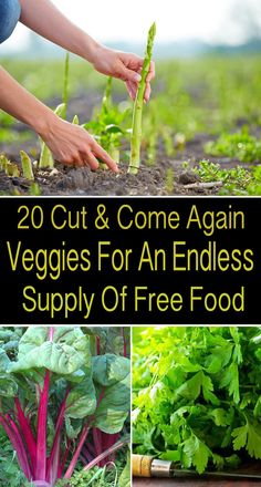 Cut and grow once more agriculture offers a standardized boost to yields as succession planting but with none extra planning gardening greenhouse gardening for beginners australia gardening 5678 song gardening d Gardening Courses, Gardening Tips, Gardening Supplies, Allotment Gardening, Flower Gardening, Succession Planting, Home Vegetable Garden, Grow Your Own Food, Edible Garden