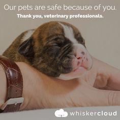WhiskerCloud builds beautiful, custom veterinary websites with built-in SEO, analytics, and cloud hosting features. The best custom veterinary websites. Veterinarian Quotes, Encouragement Quotes, Encouraging Sayings, Veterinary Medicine, Fur Babies, Pets, Veterinarians, Llamas, Goals