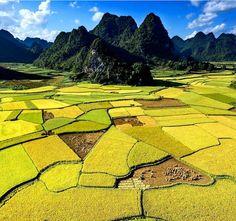 Les récoltes dans les rizières du nord du Vietnam, comme celles de la province de Kao Bang, se font en septembre et octobre! 📸 Crédit photo @nhanlephotography