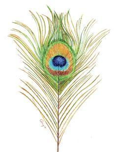 How to Draw an Iridescent Peacock Feather in Coloured Pencil | Features | Painters Online