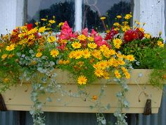 I love window boxes...need some for our house!