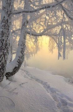 Image de photography, winter photography, and seti Winter Szenen, Winter Love, Winter Magic, Winter Christmas, Winter Trees, Snow Pictures, Nature Pictures, Winter Songs, Snow Scenes