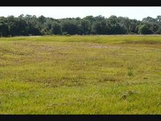 Parrish Florida Vacant 1 Acre Lot For sale in Foxbrook