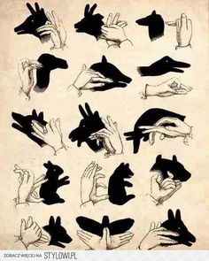 Shadow Animals