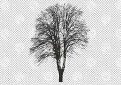 Winter tree cutout by Gobotree