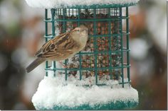 Bird trying to feed in the snow