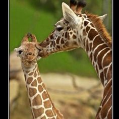 Love your momma!