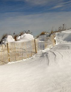 forest beach snow fence by betty wiley, via Flickr