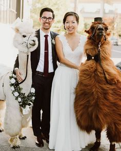 Ever wish you could have a llama or alpaca at your wedding?