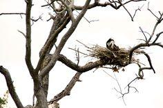Cada mãe sabe como fazer um ninho.  Fotografia: Silvia Ana Cabieses no Flickr.