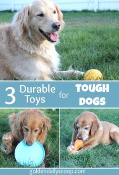 three durable toys for tough dogs