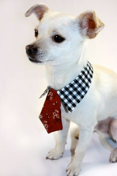 A beautiful and functional clothes are a necessity in every dog's wardrobe. Dog clothes are also joy and fun for the animals. I Love Dogs, Cute Dogs, Cute Dog Collars, Pet Fashion, Fashion Clothes, Chihuahua Love, Dog Pattern, Dog Hoodie, Dog Sweaters