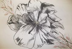 Floral, flower, sketch, charcoal, pencil By Tara Kingsley-Bellamy