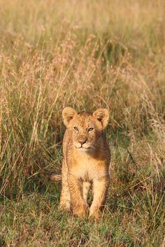 Tanzania. Plan your ultimate tanzania safari @  www.safaribookings.com/tanzania