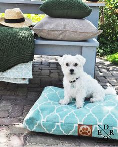 """Das große und dekorative Hundekissen / Hundepolster """"Sammy"""", ist ein Schmuckstück für jedes Zuhause. Das bequeme Hundebett ist aus strapazierfähigem East Stonewash-Gewebe aus 100% Baumwolle gefertigt und hat einen rutschfesten Boden. Buddha Kopf, Sammy, Nice, Cat Bowl, Desk Clock, Boden, Ad Home, Cotton, Nice France"""