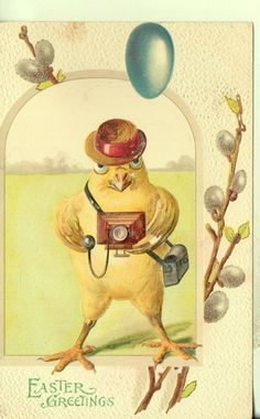 1911   vintage Easter card - Chick in straw hat taking a picture with an old-fashioned camera.