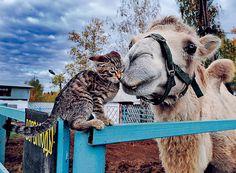 В приютском зоопарке всюду царит любовь: дружба животных - не диковинка.
