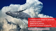 """wakes up in animals, becomes self aware in humans."""" [Rumi] From my WiP non-fiction book States Of Consciousness, Nonfiction Books, Inspire Me, Wake Up, Whale, Minerals, Sleep, Writing, Plants"""