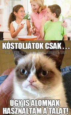 Grumpy Cat, Cat Memes, Haha, Jokes, Funny, Movie Posters, Husky Jokes, Ha Ha, Film Poster