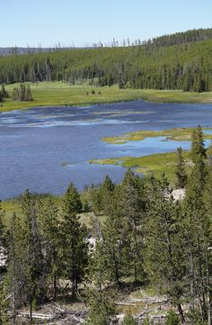 Mountain lake with yellow water lilies, Yellowstone National Park