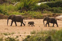 God's Beauty in Kruger Park