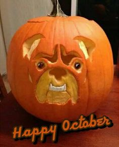 19 best halloween ideas bulldogpumpkin images pumpkin carvings rh pinterest com