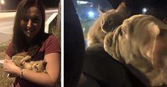Un peu plus tôt ce mois-ci, une journaliste s'estfait interrompre avant même de commencer son direct par… un chat! Le félin a réussi à obtenir toute l'attention et les bons soins de l'équipe, allant même jusqu'à se faire adopter par la jeune femme.