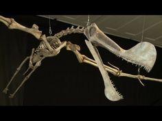 TV BREAKING NEWS Le plus grand fossile ptérosaure jamais trouvé au Brésil - http://tvnews.me/le-plus-grand-fossile-pterosaure-jamais-trouve-au-bresil/