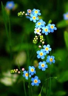 I have a forget-me-not tattoo...love it!