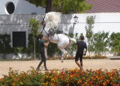 The Royal Riding School in Cadiz, Spain Famous Andalusian Horses Some Beautiful Images, Most Beautiful, Beautiful Places, Riding School, Italy Spain, Andalusian Horse, European Travel, Us Travel, Places Ive Been