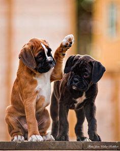 Brown dog: high five! Black dog:…. Brown dog: no… ok