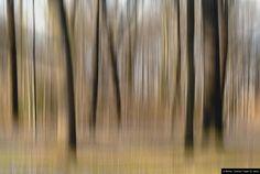 """© Blende, Charlotte Treppe (12 Jahre), Erholung, Thema: """"Auf der Straße""""   #Wald #Bäume #Natur"""