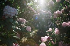Image about love in Vale das Bonecas by EMILY Nature Aesthetic, Flower Aesthetic, Beautiful Lights, Life Is Beautiful, Beautiful Places, Cider House, Plants Are Friends, Fairy Land, Pretty Flowers