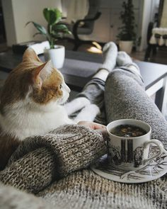 Cat and coziness with a cup of tea = Hygge Crazy Cat Lady, Crazy Cats, I Love Cats, Cute Cats, Photo Chat, Tier Fotos, Tea Cozy, Pets, Snuggles